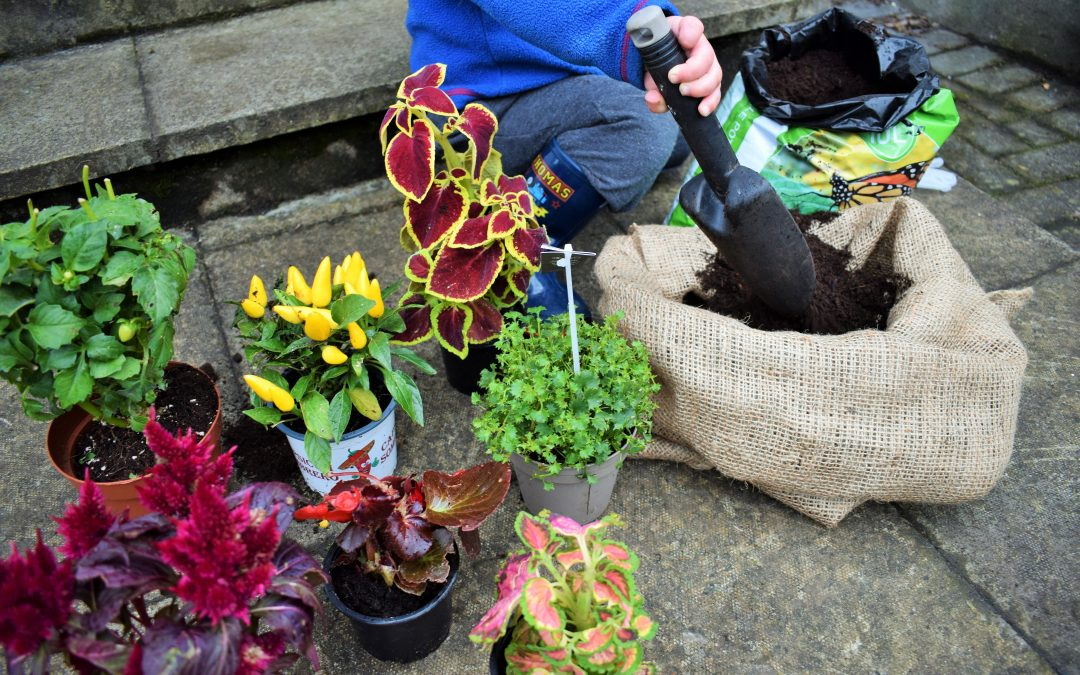 Five Tips for Gardening Made Easy